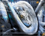 snake62410