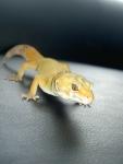 gecko59