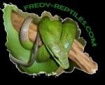 fredy-reptiles