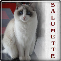 salumette111