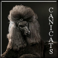 canicats111