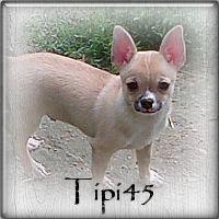 tipi451