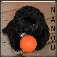 Nanou34