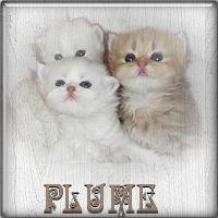 Plume23