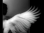 Angel-midnightrun