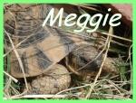 Meggie1111