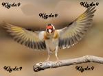 klyde9