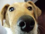 Dog Center Cosméto