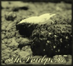 thepoulpe57