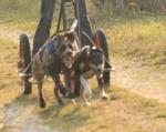 Kinya-passioncanicross