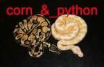 corn_&_python
