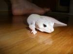 geckomarty1