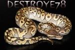 destroye781
