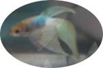 Nenuphar1