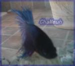 ChaMeuh