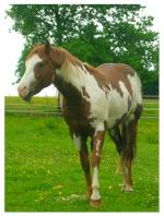 paint-horse71