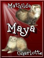 Maya13