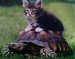 lulu la tortue1