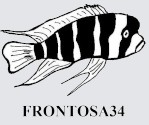 Frontosa34
