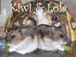 Kiwi&Lola