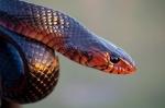 snakes-whisperer