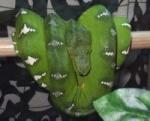snake.jojo11