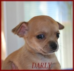 Darly