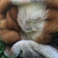 leon_the_bulldog