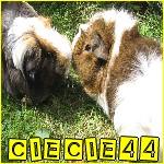 clecle44