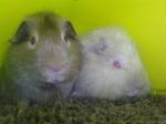 Lola&Chelby