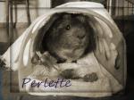 Perlette1