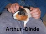 Arthur-Dinde