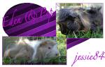 jessie84