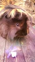 Cookie-Kiwi