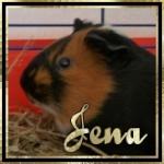 Jena68