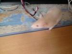 rattouxlove