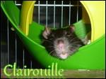 Clairouille