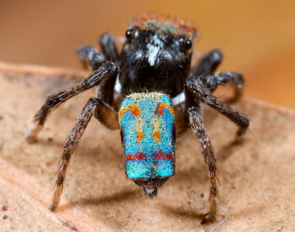 اجمل عنكبوت فى العالم Image030-580x456