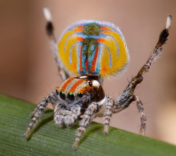 اجمل عنكبوت فى العالم Image0041-580x515