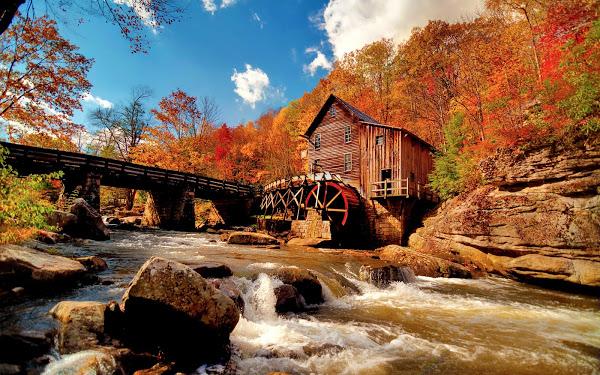 Bienvenidos al nuevo foro de apoyo a Noe #295 / 05.11.15 ~ 14.11.15 - Página 2 Autumn-forest-landscape-1920x1200-wallpaper