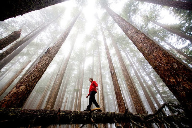 Walk in the Forest to Heal Oneself Forest-bathing