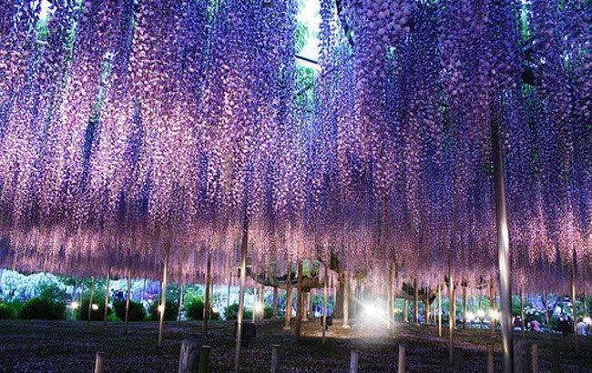 அழகிய ஜப்பான் படங்கள் சில....... Water_Fall_Flowers_Japan_15