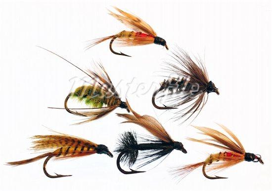 Mušičarenje Flies