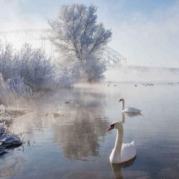 .. Y LLEGA EL INVIERNO... - Página 4 Bellos_paisajes_invernales_08