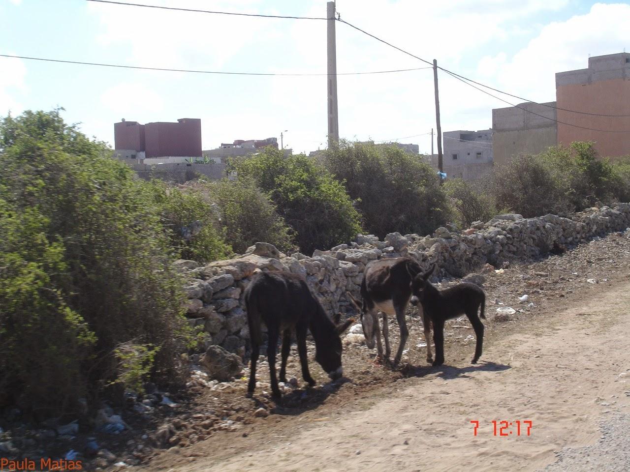 marrocos - Marrocos 2014 - O regresso  DSC03220_new