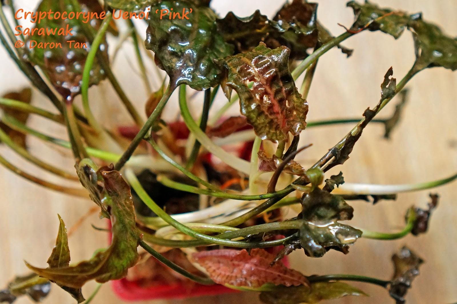 Tình yêu cây cỏ ĐV2 - Page 92 DSC06783b