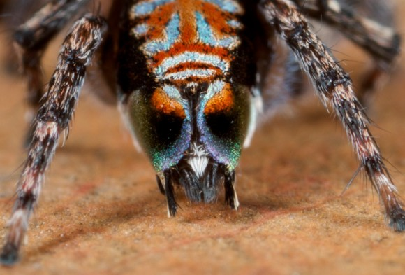 اجمل عنكبوت فى العالم Image048-580x393