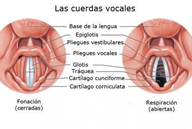 УНТВАЙН: ВОЗРОЖДЕНИЕ Cuerdas_vocales-380x255