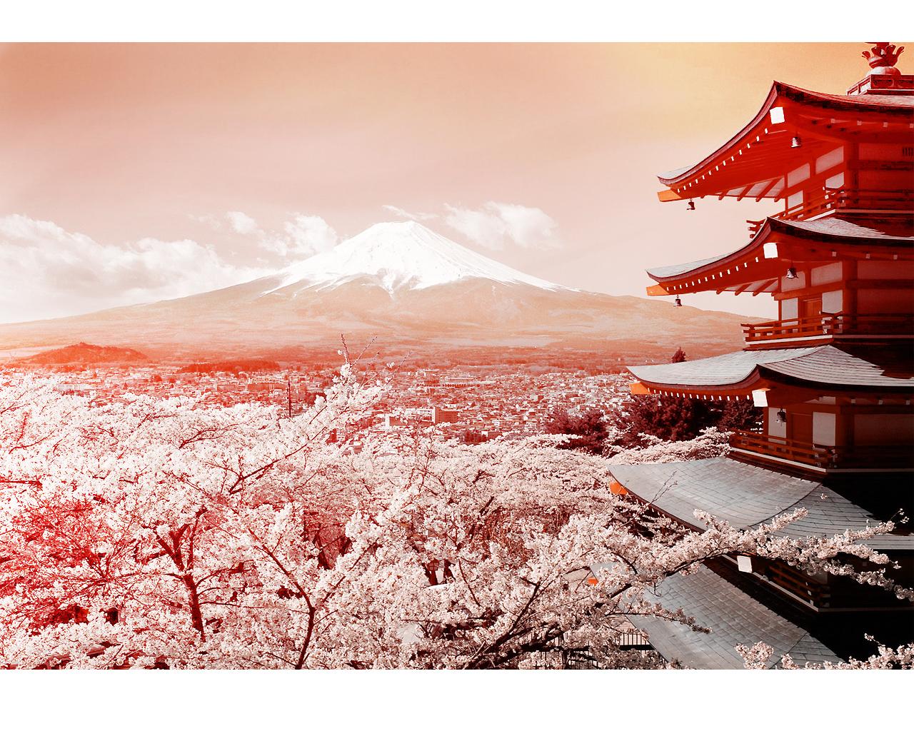 Curiosidades sobre o Monte Fuji Fuji_Cherry_Blossoms_by_britmodtokyo