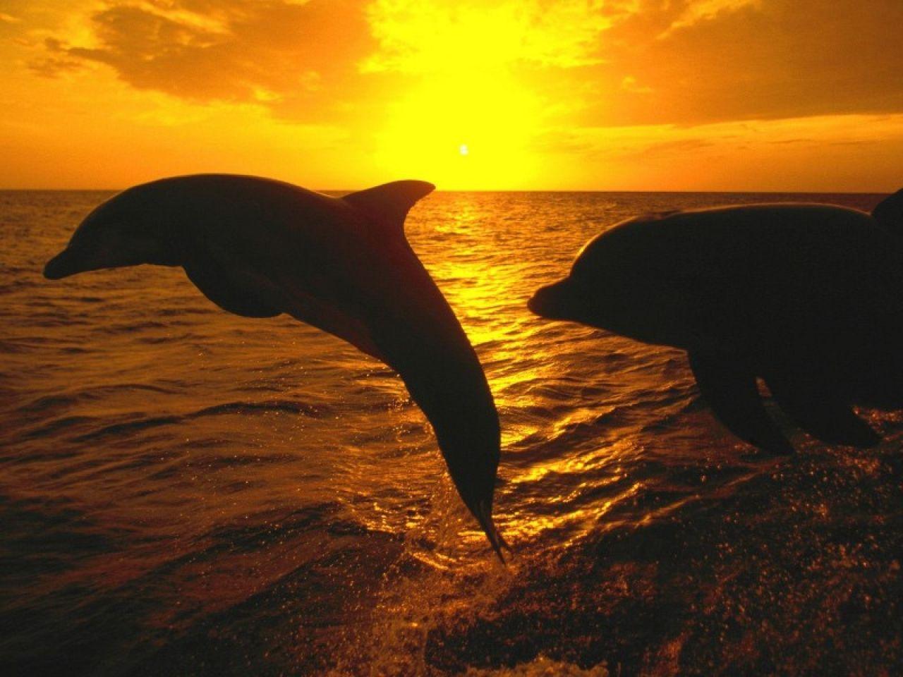 Bienvenidos al nuevo foro de apoyo a Noe #250 / 28.04.15 ~ 30.04.15 - Página 3 Paisajes-con-animales-delfines